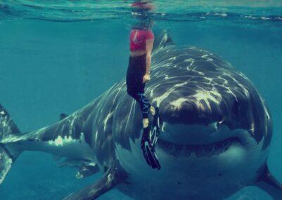 i migliori film di squali da vedere